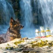 Unterwegs mit Tarad´or Hundenahrung